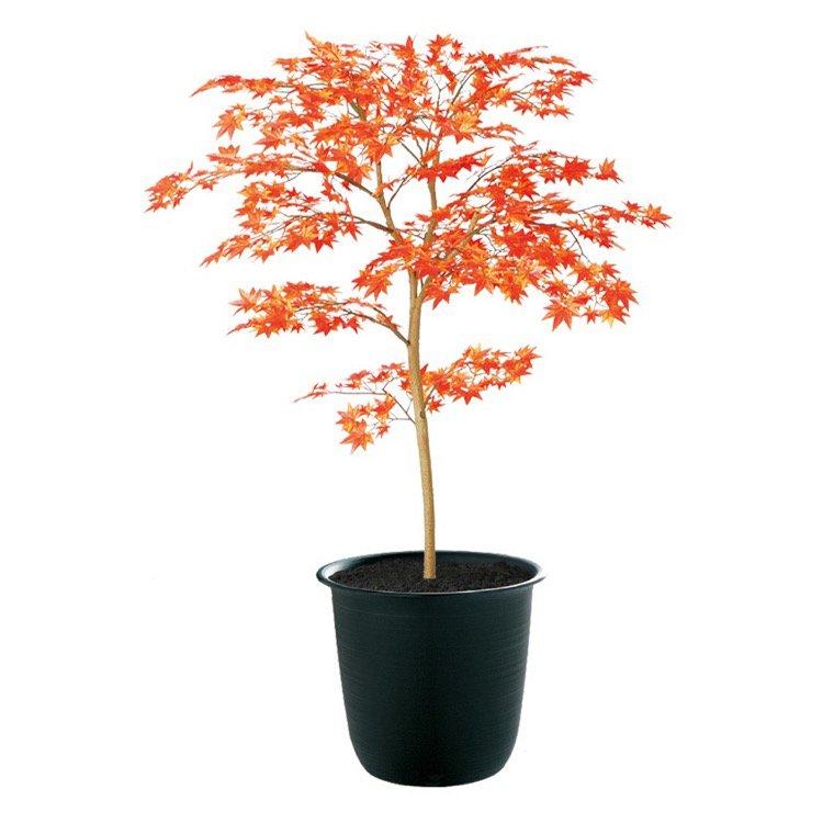 【人工観葉植物】 ヤマモミジ RED FST 100cm 鉢植 【フェイクグリーン 大型 観葉植物 造花 光触媒 CT触媒 インテリア】