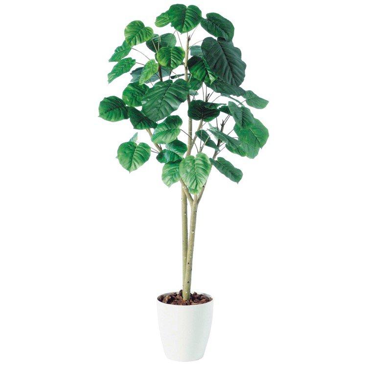 【人工観葉植物 大型】 ウンベラータ2本立 180cm 鉢植 【フェイクグリーン 観葉植物 造花 光触媒 CT触媒 インテリア】