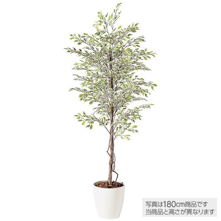 【人工観葉植物 大型】 ベンジャミナスターライト (ベンジャミン) 200cm 鉢植 【フェイクグリーン 観葉植物 造花 光触媒 CT触媒 インテリア】
