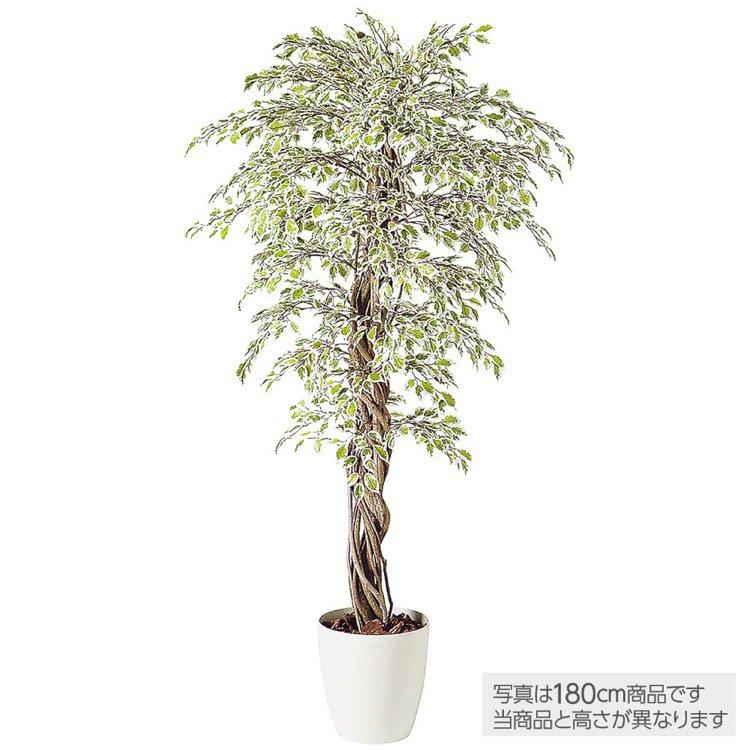 【人工観葉植物】 ベンジャミナスターライトリアナ (ベンジャミン) 150cm 鉢植 【フェイクグリーン 大型 観葉植物 造花 光触媒 CT触媒 インテリア】