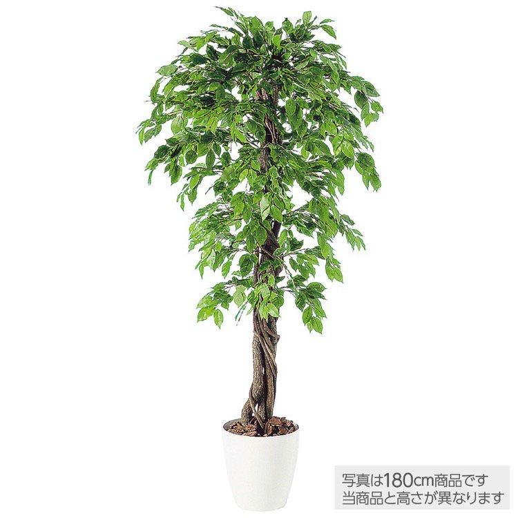 【フェイクグリーン 大型】 ベンジャミナスプラッシュリアナ (ベンジャミン) 200cm 鉢植 【観葉植物 造花 人工観葉植物 光触媒 CT触媒 インテリア】