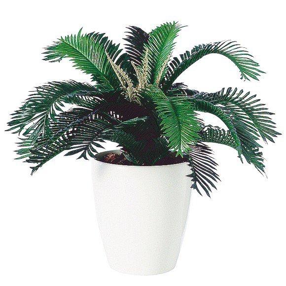 【人工観葉植物】 ソテツC 50cm 【観葉植物 造花 フェイクグリーン 光触媒 CT触媒 インテリア】