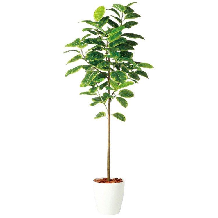 【人工観葉植物 大型】 アルテシマ FST (アルティーシマ アルテーシマ) 200cm 鉢植 【フェイクグリーン 観葉植物 造花 光触媒 CT触媒 インテリア】
