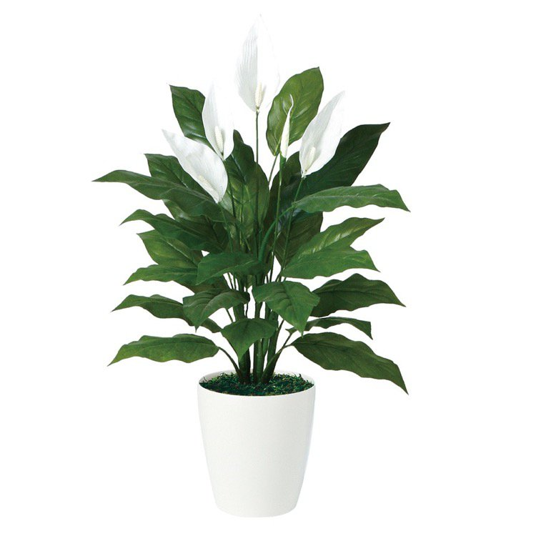 【観葉植物 造花】 スパティフィラム 80cm 【人工観葉植物 フェイクグリーン 光触媒 CT触媒 インテリア】