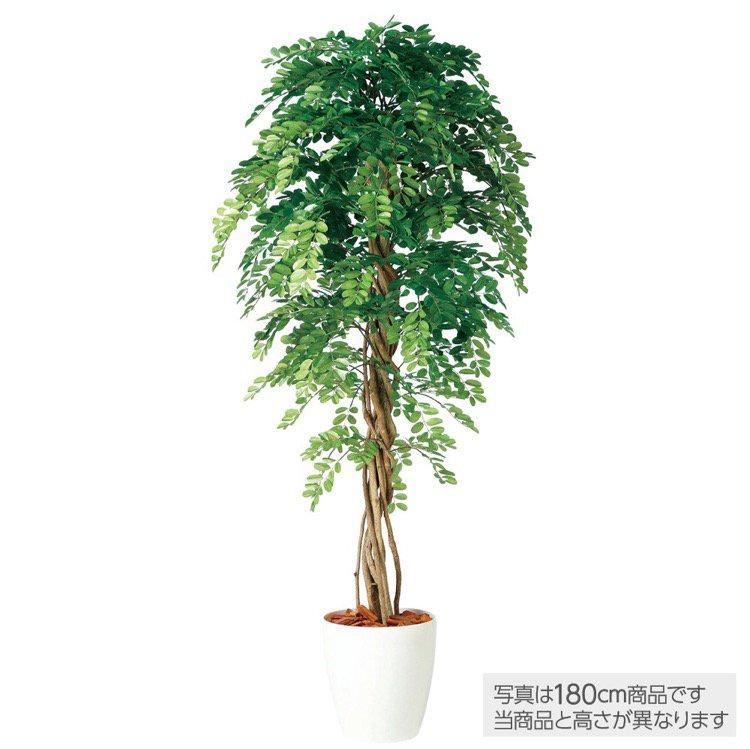 【フェイクグリーン 大型】 アカシアリアナ 200cm 鉢植 【観葉植物 造花 人工観葉植物 光触媒 CT触媒 インテリア】