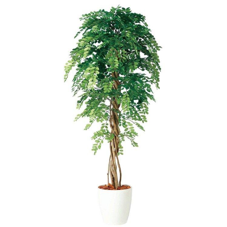 【人工観葉植物 大型】 アカシアリアナ 180cm 鉢植 【フェイクグリーン 観葉植物 造花 光触媒 CT触媒 インテリア】