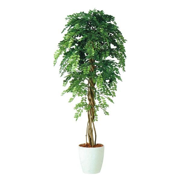 人工観葉植物 アカシアリアナ180 高さ180cm dt98983 (代引き不可) インテリアグリーン 造花