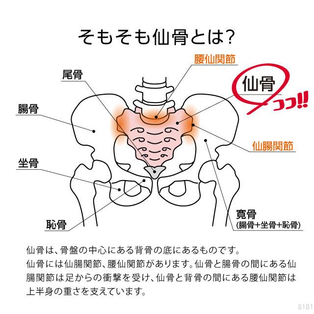 腰 回り の 筋肉