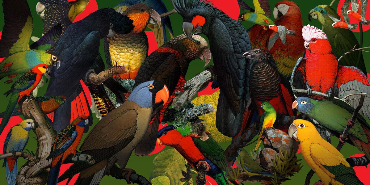 アートパネル 10cm単位でサイズオーダーできる 絵画 壁掛け インテリア 壁飾り キャンバス アート ウォール 鳥 オウム インコ e315540 壁紙屋本舗