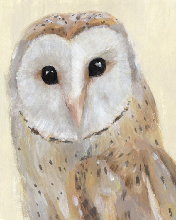 フクロウ メン ペットの鳥類図鑑