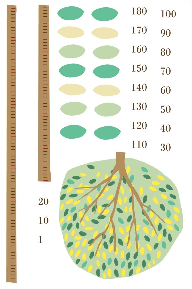 楽天市場 ウォールステッカー 身長計 メモ付き 記念 目盛り 木 葉っぱ