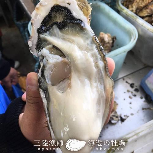 生牡蠣 殻付き 特大 夢牡蠣 15個生食用 生ガキ 大粒生牡蠣 特大三陸 雄勝湾(おがつ湾)漁師直送 新鮮生がき