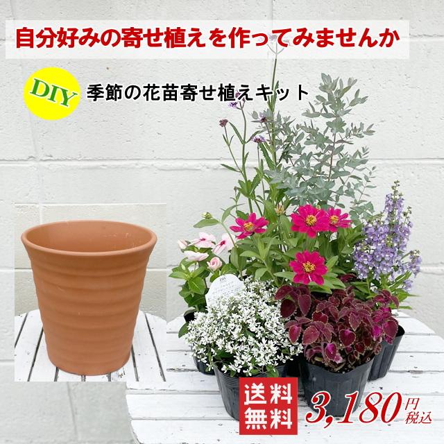 自分好みの寄せ植えを作ってみませんか 送料無料 ギフト プレゼント ご褒美 品質保証 DIY季節の草花を寄せ植えキット 培養土セット無し