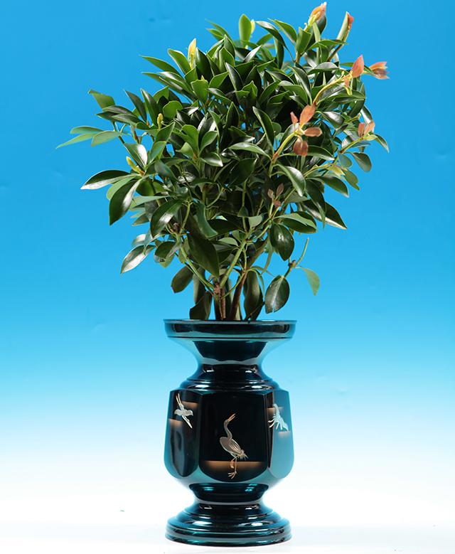 品質保証 供花 富士のシキミ 【シキミ属】品質の良い富士のシキミ 1対(2本組)