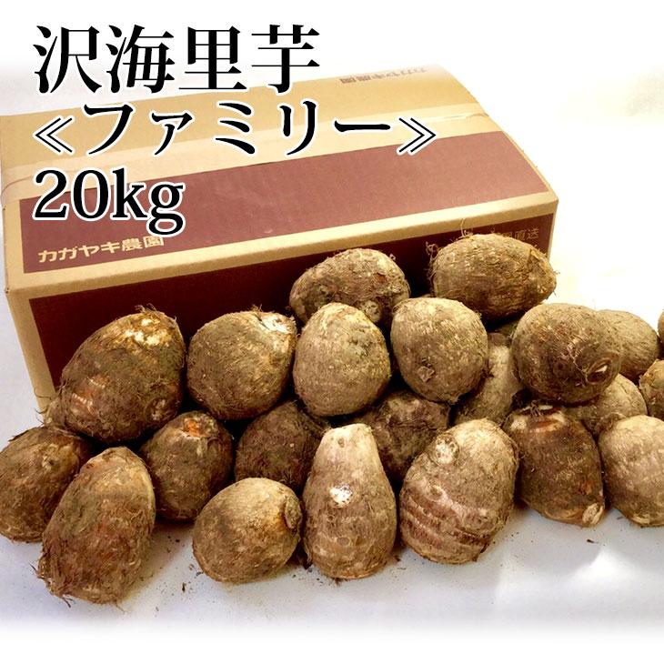 里芋 さといも サトイモ 20kg ねっとり 贈答用 ご自宅用 本物 M~Lサイズ 一部地域除く 送料無料 沢海里芋〔ファミリー〕 冬ギフト もっちり セール 市場