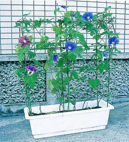 プランター栽培用支柱としてご利用いただけます ガーデニング 用品 ガーデニング用品 高額売筋 プランター 菜園 園芸 家庭菜園 プランター用 花のアーケード CB99 爆売り 第一ビニール のびーる支柱 おすすめ おしゃれ
