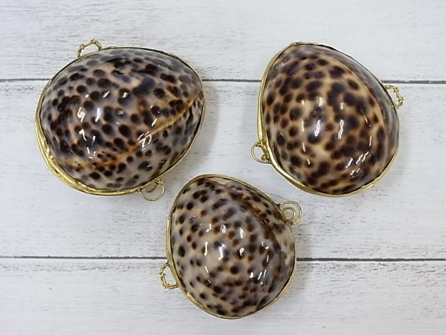 貝殻とヒトデの専門店 小物入れ-シプレアタイガー- 3個 授与 約6~7cm 送料込