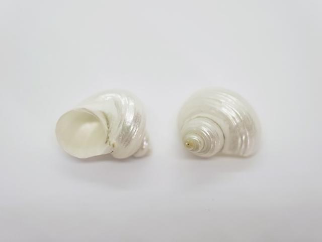 貝殻とヒトデの専門店 ■メール便可 春の新作 16袋まで ■シルバーマウス磨き 約2~3cm 5個 貝 貝殻 シェル 巻貝 フォト ホワイト アクセサリー コレクター デザイン 磨き 置物 ブライダル 贈答