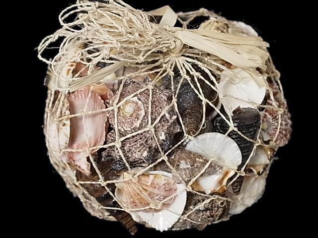 貝殻とヒトデの専門店 貝殻1kg詰め合わせ アバカ袋 新品 約1kg 1個 貝 貝殻 海 フォト シェル 有名な ハンドメイド 砂浜 ディスプレイ ミックス