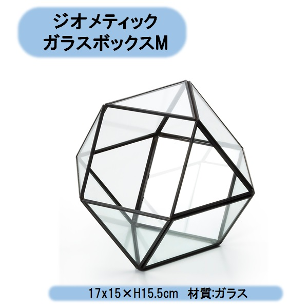 ジオメティックガラスボックスM 2個 テラリウム エアープランツ ミニ観葉植物 ハイドロ 北海道・沖縄・離島出荷不可
