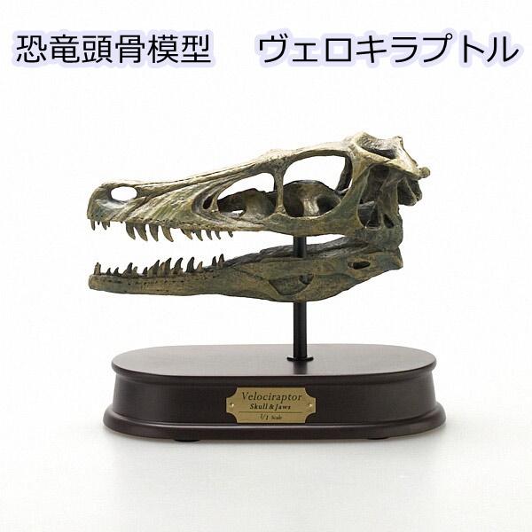 恐竜 おもちゃ フィギュア ヴェロキラプトル スカル恐竜頭骨モデル(FDS-654)スケール1/1モデル
