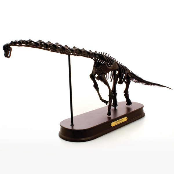 ブラキオサウルス スケルトンモデル (FDS-603/BR)フェバリット (FDS603)フィギュア ラッピング 熨斗 ジェラシックワールド恐竜