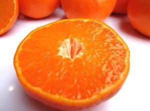 优质柑橘、 佐贺生产仍然在六或七球之前