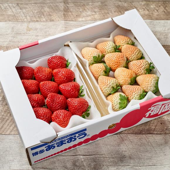 いちごが大好きです♪産地直送でフレッシュ新鮮な美味しい「いちご」はどれ?