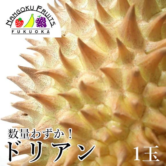 【数量限定】タイ産 ドリアン1玉