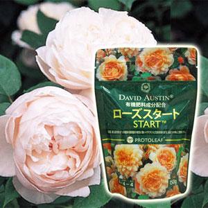 流行のアイテム デビッドオースチン社認定商品 バラの植え付け 植替え時に 菌根菌ローズスタート バラの植替えに150g SG ローズスタート 人気激安