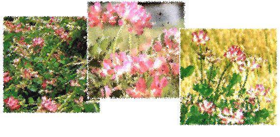 送料無料 新米 30年産 広島県産コシヒカリ 20kg 特別栽培米 5kg×4金の袋30年産1等米