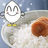 送料無料 広島県産コシヒカリ 20kg 5kg×4緑袋令和元年産 1等米 米 コメ お米