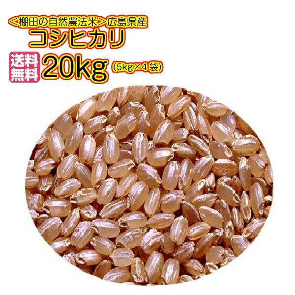 送料無料 広島県産コシヒカリ 20kg 5kg×4青袋令和元年産 1等米
