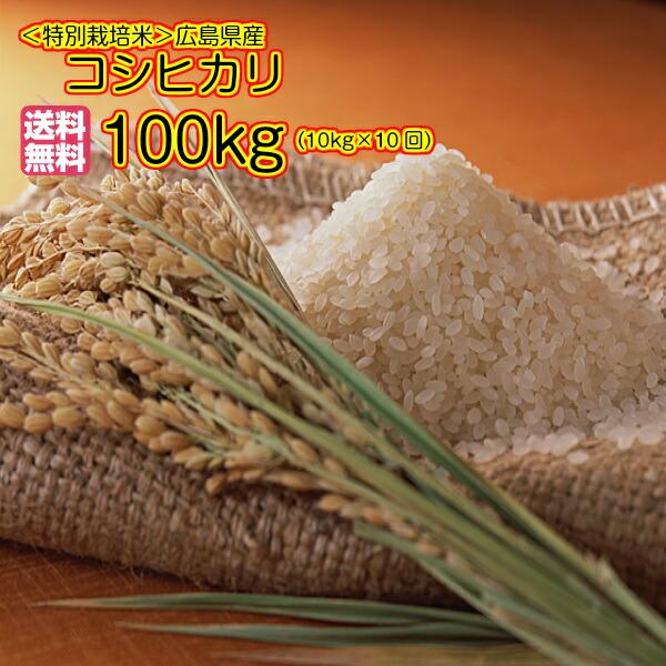 送料無料 特別栽培米広島県産コシヒカリ 10kg×10回お届けコース 各回5kg× 2ゴールド袋