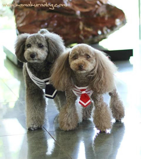 数量限定 メール便可 ドッグウェア 犬の服 涼しげなマリンボーダー 特価 オリーブワンピース セール