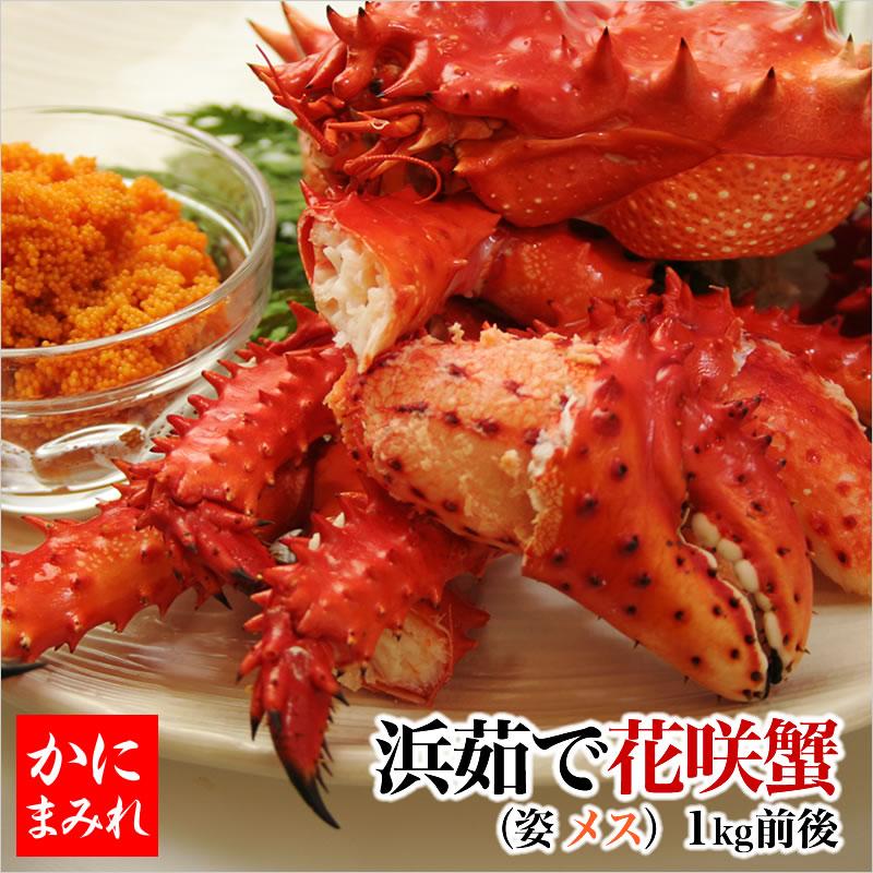 北海道の花咲カニ 訳なし子持ちメス 内子と外子がおいしい 花咲蟹(子付きメス1kg前後)