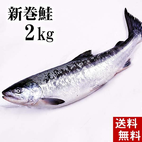 【3月4日20時】スーパーセール(送料無料)新巻鮭の姿 2kg 味を引き立てる塩気と、身が引き締まりしっとりとしたサケ本来の味をお楽しみください。焼き魚やしゃけおにぎりも美味しい。北海道グルメ食品 魚介類・シーフード サケ 新巻鮭