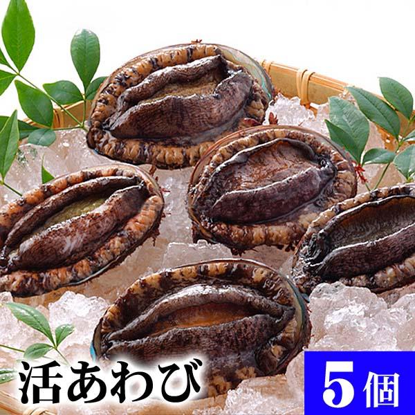 北海道産 活蝦夷鮑 5個入りで合計500g前後 エゾアワビが活きたままで届きます。活あわびだからこそお刺身、肝醤油、肝刺し、水貝、煮物、鉄板であわびステーキで食べられます。北海道グルメ食品 魚介類·シーフード 貝 アワビ