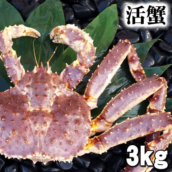 北海道の海鮮お取り寄せ かに太郎 大型かに 活たらばがに 3kg前後 オス 茹でたてなら到着後、すぐ食べられる未冷凍のたらば蟹です。活カニならではのお刺身用でも食べられます。焼きガニ、蒸し蟹もできる活タラバガニ/活けタラバ蟹