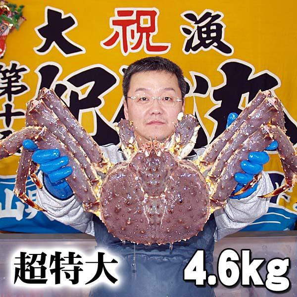 北海道の海鮮お取り寄せ かに太郎 北海道産 超特大かに 活たらばがに オス 4.6kg前後 茹でたてなら到着後、すぐ食べられる未冷凍のたらば蟹です。活カニならではのお刺身用でも食べられます。焼きガニ、蒸し蟹もできる活タラバガニ/活けタラバ蟹