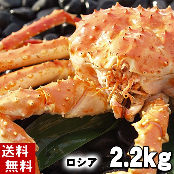 北海道の海鮮お取り寄せ かに太郎 (送料無料) タラバガニ たらばがに 姿 2.2前後 中型 ボイル冷凍(ロシア産) たらば蟹贈答用のカニ姿です。かに飯や、焼きガニも美味しい。身の入りいいかに足。北海道グルメ食品 魚介類・ カニ タラバガニ ボイル(ギフト)