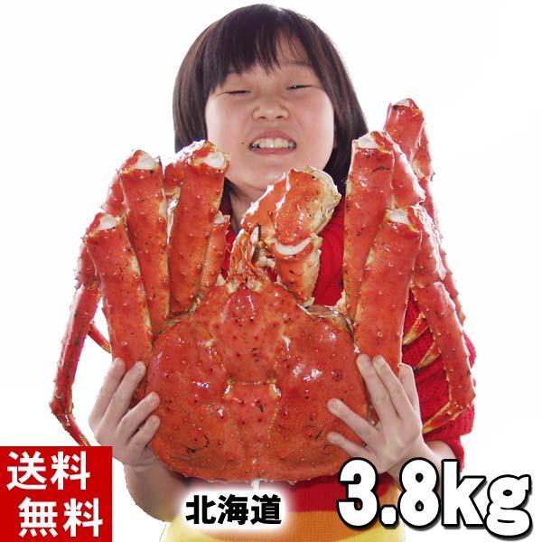 (送料無料) タラバガニ たらばがに 姿 3.8kg前後 特大 ボイル冷凍(北海道産) たらば蟹贈答用のカニ姿です。かに飯や、焼きガニも美味しい。身の入りいいかに足。カニ通販、北海道グルメ食品 魚介類 北海道の海鮮お取り寄せ かに太郎