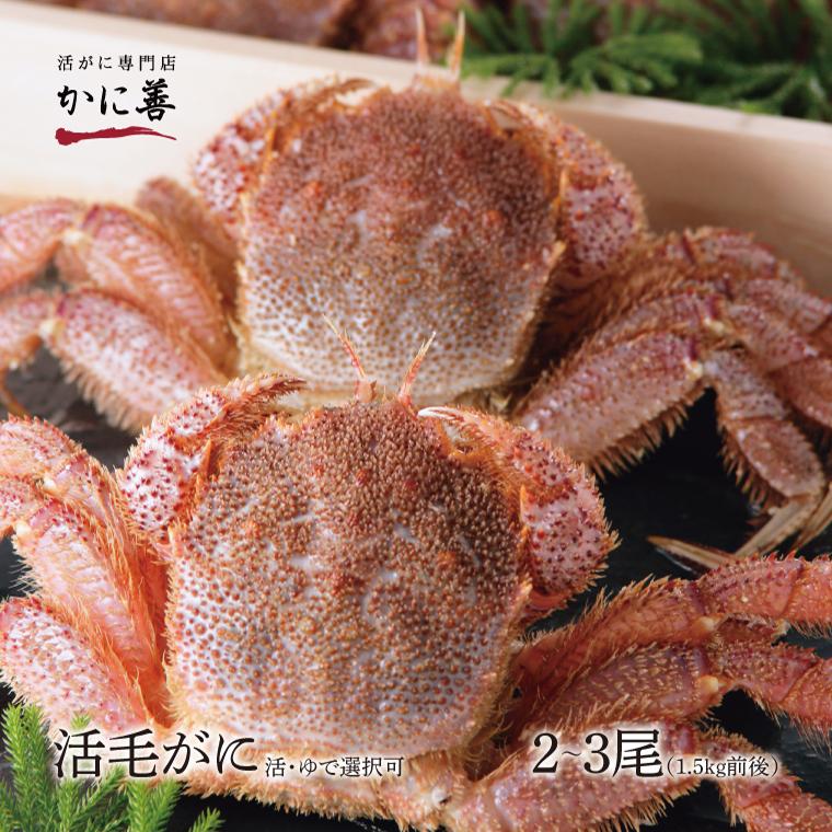 毛ガニ セット 活毛ガニ 訳あり 2~3尾 (1.5kg前後) 北海道産 冷蔵 ボイル対応 かに 毛蟹 活かに 活蟹 刺身も 年内発送