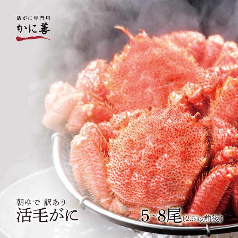 訳あり 活毛ガニ 5~8尾セット (合計約2.5kg) 北海道産 冷蔵 かに 毛蟹 活かに 活蟹 刺身も 年内発送