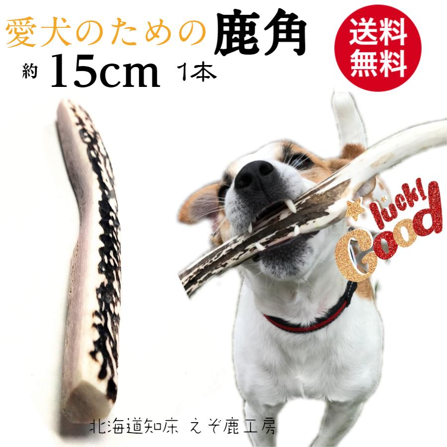 愛犬のための鹿角です わんちゃんの好む髄がある部分の角を使用しています 鹿の角はじめてのワンちゃんもお試しにちょうど良いサイズ 価格 鹿の角 犬 おもちゃ 激安通販ショッピング 15cm 4つ割り 1本 鹿角 小型犬 国産 北海道 天然 エゾ鹿角 おやつ 玩具 ペット 防止 ガム エゾシカ 犬のおやつ しつけ 犬用 デンタルケア スティック 愛犬 フード お試し 大決算セール 骨 角 健康 歯磨き ボーン 歯周病