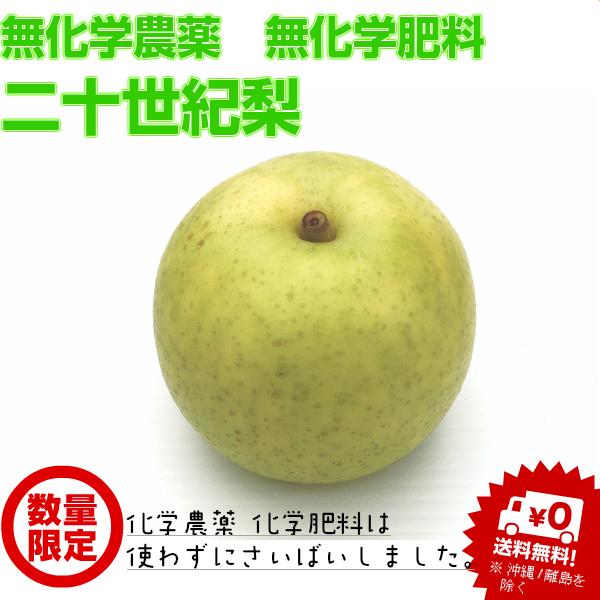 【無化学農薬・無化学肥料栽培】二十世紀梨(4Lサイズ5個)