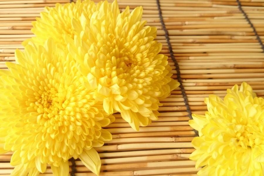 ディスカウント 旬のオススメ 秋田県産 食用菊 約100g入り 絶品 黄