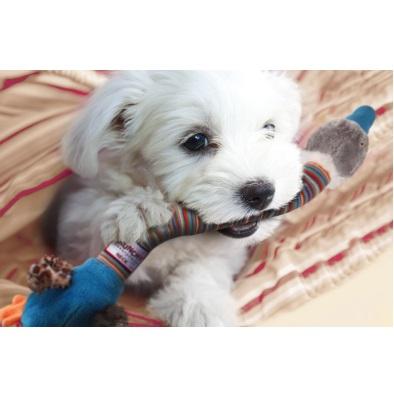 PLATZ プラッツ GiGwi クランチ—ネックEX ダックオレンジ 【犬用品】【おもちゃ】【ぬいぐるみ】