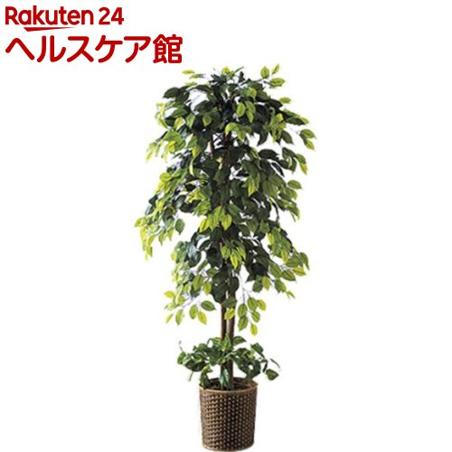 インテリアグリーンDX 2点セット ベンジャミン&ベンジャミン(1セット)【送料無料】