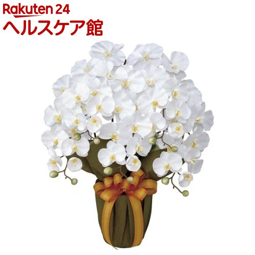 エレガント胡蝶蘭 白(1個)